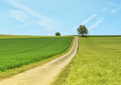 Course Image for 5WLA EcoWellnessWoodland Walk & Tree Identifi